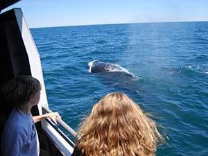 walvis tours boston