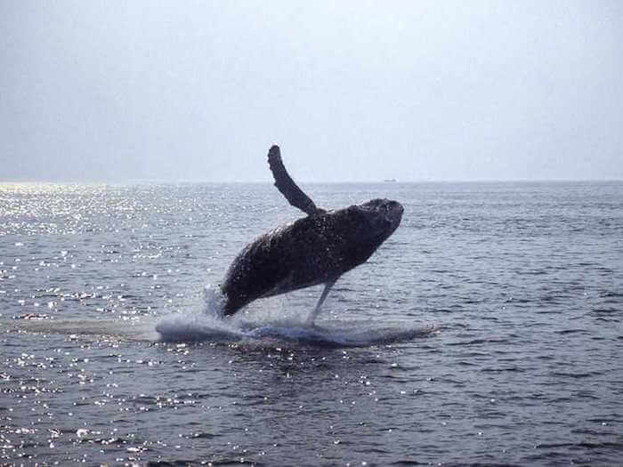 boston walvissen spotten